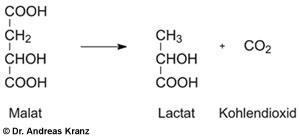 Abb. T3.2: Chemismus der malolaktischen Gärung.