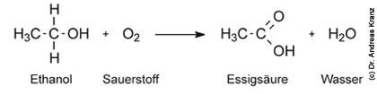 Abb. 15.2: Oxidativer Abbau von Ethanol zu Essigsäure durch Essigsäurebakterien