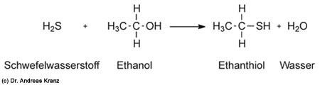 Abb. 15.4: Entstehung des Mercaptans Ethanthiol aus Ethanol in Gegenwart von Schwfelwasserstoff.