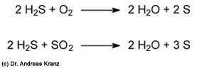 Abb. 15.5: Abbau von Schwefelwasserstoff in Gegenwart von Sauerstoff oder Schwefeldioxid.