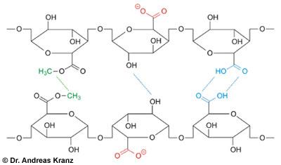 Abb. W5.1: Interaktionen von zwei Pektinketten (schwarz) durch hydrophobe Wechselwirkung zwischen Methylgruppen (grün) und durch H-Brückenbildung (blau). Dissoziierte Carboxylgruppen (rot) tragen Ladungen und bewirken bewirken eine Abstoßung.