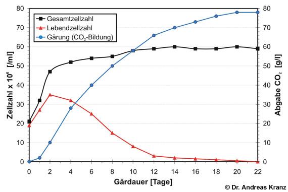 Abb. 15.a1: Hefegesamtzellzahl, Hefelebendzellzahl und Gärungsaktivität im Verlauf einer typischen Weingärung ohne Nachzuckerung (nach Sponholz et al., 1990).